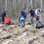 Pracownicy firmy CEMEX sadzą drzewa